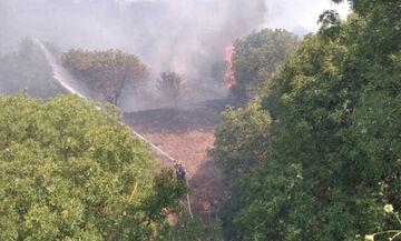 Χίος: Μεγάλη πυρκαγιά, εκκενώνονται 2 χωριά - Καίει έκταση με ελιές κοντά στη ΒΙΑΛ (vid)
