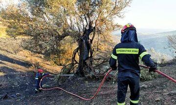 Μία σύλληψη για τη φωτιά στο Πέραμα