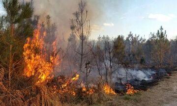 Κεχριές: Μεγάλη η φωτιά – Στο μέτωπο και ο Νίκος Χαρδαλιάς (vid)