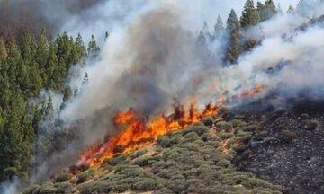 Αταλάντη: Μεγάλη πυρκαγιά σε εξέλιξη κοντά σε σπίτια
