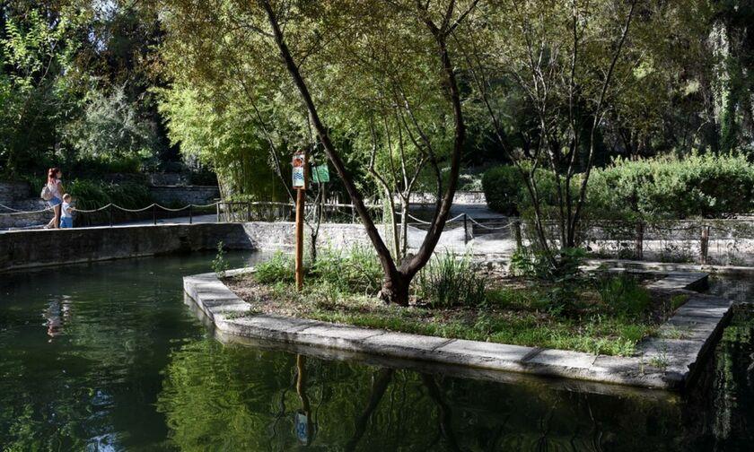 Βοτανικός Κήπος Διομήδους: Ο μοναδικός στον κόσμο με ιστορικά φυτά: Από το κώνειο έως τον μανδραγόρα