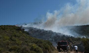 Χαρδαλιάς: Προσοχή! Αύριο η πιο επικίνδυνη για πυρκαγιές ημέρα του καλοκαιριού