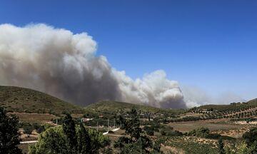Φωτιές στην Αττική: Δύσκολη κατάσταση στη Ν. Μάκρη. Εκκενώθηκαν οικισμός και οικοτροφείο στα Καλύβια