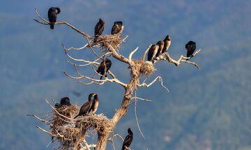 Νέο Μεξικό: Μαζικός θάνατος χιλιάδων πουλιών ανησυχεί τους βιολόγους