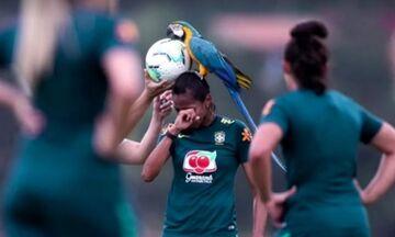 Παπαγάλος διέκοψε την προπόνηση της Εθνικής Βραζιλίας (vid)