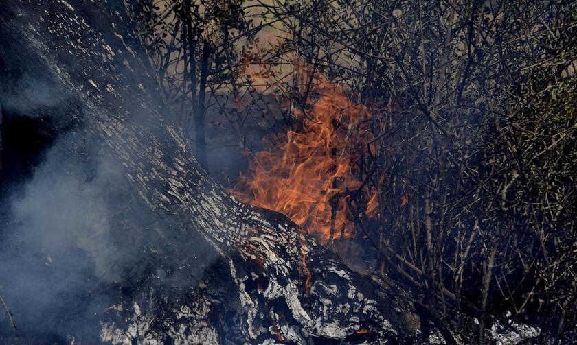 Ανεξέλεγκτη η πυρκαγιά στη Ζάκυνθο, εξετάζεται η εκκένωση οικισμού