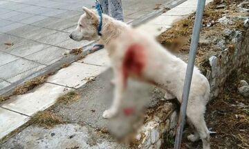Νίκαια: Καθηγητής μαχαίρωσε σκύλο στη μέση του δρόμου! (vid)