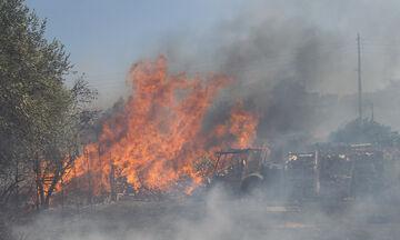 Πυρκαγιά σε δασική έκταση του δήμου Λουτρακίου - Αγίων Θεοδώρων