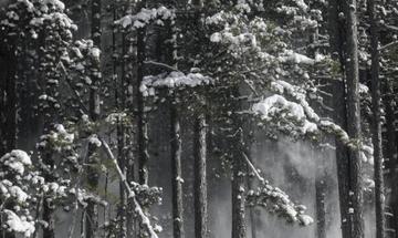 Χιονίζει στα ορεινά των Τρικάλων - Προβλήματα στην κίνηση των οχημάτων (vid)
