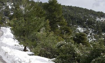 Καιρός: Αισθητή πτώση της θερμοκρασίας - Παγετός και χιόνια στα ορεινά και ημιορεινά