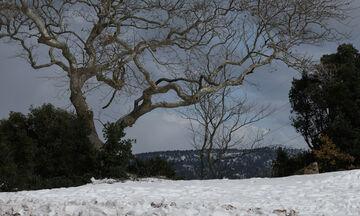 «Λέανδρος»: Χιόνια στην Πάρνηθα, στην ...κατάψυξη η Βόρεια Ελλάδα (vid)