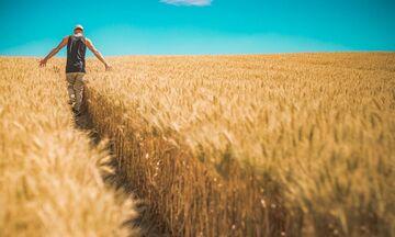 Τι αλλάζει με τους λογαριασμούς ρεύματος για αγρότες, βιομηχανίες, ξενοδοχεία
