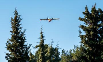 Λίμνη Ευβοίας: Έρευνα για εμπρησμό σε δασική πυρκαγιά