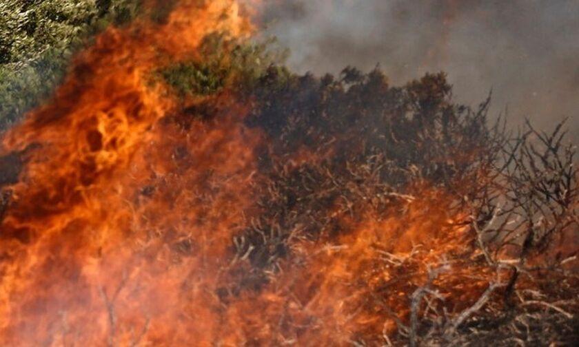 Ηλεία: Φωτιά σε δασική έκταση στην περιοχή Σμέρνα