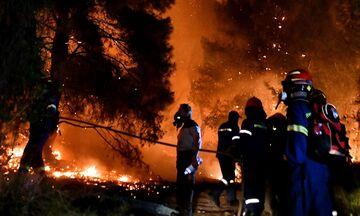 Φωτιά στον Σχίνο Κορινθίας: Τι οδήγησε στην καταστροφική πυρκαγιά