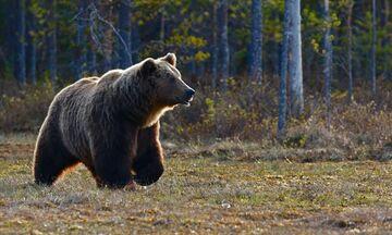 Σλοβακία: Αρκούδα σκότωσε άνδρα στα όρη Τάτρα