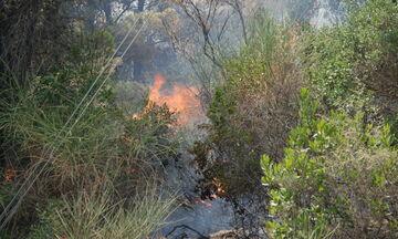 Υπό μερικό έλεγχο η πυρκαγιά στη Βραυρώνα