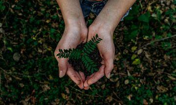 Έρευνα: Το φύτεμα νέων δέντρων θα αυξήσει τις καλοκαιρινές βροχές στη νότια Ευρώπη