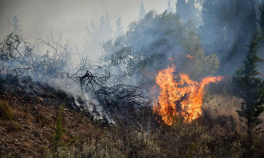 Δροσιά: Βελτιωμένη η εικόνα της πυρκαγιάς - Οριοθετημένη η φωτιά στην Ελεκίστρα