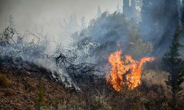 Θύριο Αιτωλοακαρνανίας: Βελτίωση παρουσιάζει η εικόνα της πυρκαγιάς, σύμφωνα με την Πυροσβεστική