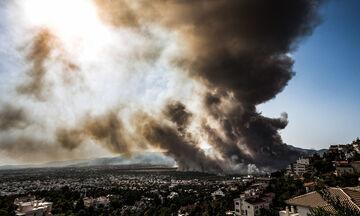 Πυρκαγιά στη Βαρυμπόμπη: Εκκλήσεις για φορτηγά ώστε να σωθούν άλογα - Μεταφέρθηκαν περίπου 300 (vid)