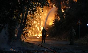 Βαρυμπόμπη: Ολοκληρώθηκε η μεταφορά αλόγων που κινδύνευσαν στην πυρκαγιά