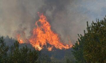 Ανατολική Μάνη: Υπό μερικό έλεγχο φωτιά στην περιοχή Δρυάλια Λακωνίας