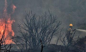 Λαμία: Φωτιά στην κορυφογραμμή της Όρθυος, στη Φθιώτιδα- Φόβοι για το χωριό Λογγίτσι