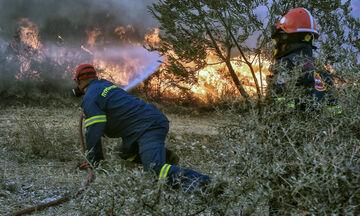 Πύργος: Χωρίς ενεργό μέτωπο η πυρκαγιά στην Κορυφή Ηλείας