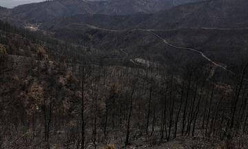 Meteo: Κάηκε το 1/3 των δασών της Εύβοιας στις πρόσφατες πυρκαγιές