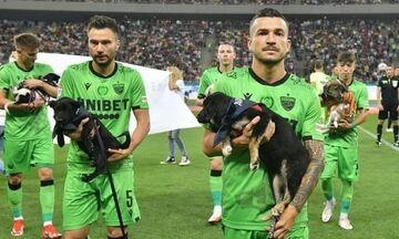 Αξιέπαινη πρωτοβουλία των Ρουμάνων για αδέσποτα ζώα!