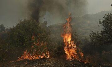 Μάνη: Σε ύφεση πυρκαγιά που εκδηλώθηκε στην περιοχή Αβραμιάνικα
