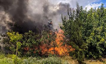 Φωτιά ξέσπασε στο Βουπράσιο Αχαΐας