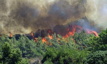 Πυρκαγιές σε δασικές εκτάσεις της Αμαλιάδας και της Ναυπάκτου